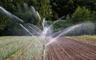 Режим орошения зеленых культур при выращивании в открытом грунте
